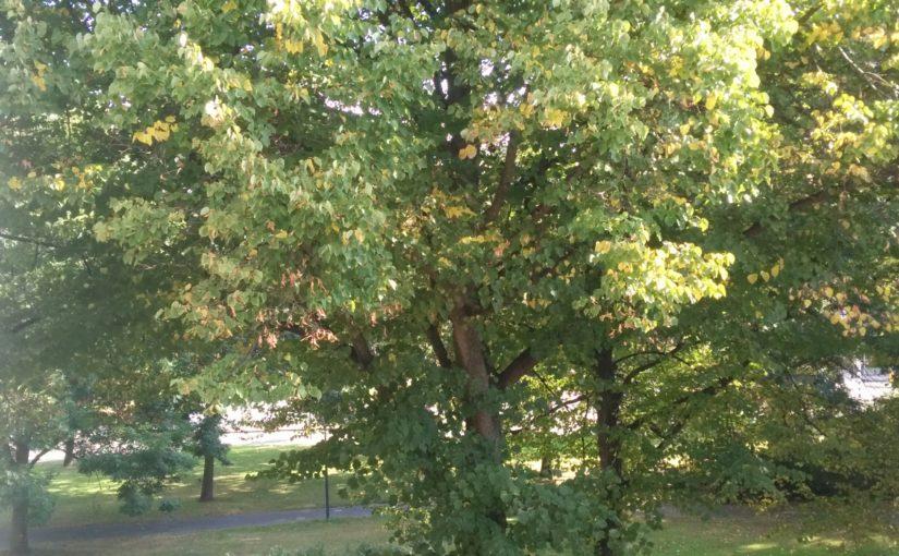 Een straatboom als getuige, als bomen konden praten…